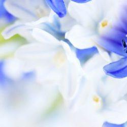 КФ Цветы-029