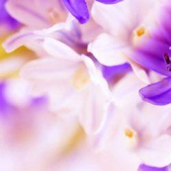 КФ Цветы-032