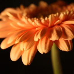 Т-Цветы-002