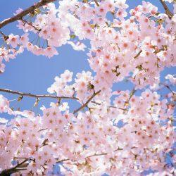 Т-Цветы-003