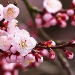 Т-Цветы-004