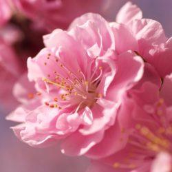 Т-Цветы-005
