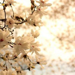 Т-Цветы-006