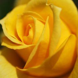 Т-Цветы-016