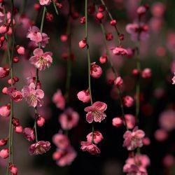 Т-Цветы-017