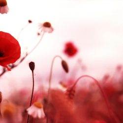 Т-Цветы-019