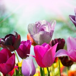 Т-Цветы-022