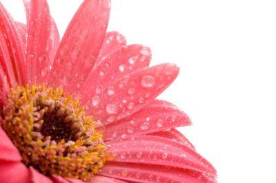 Т-Цветы-049