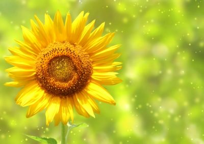 Т-Цветы-056
