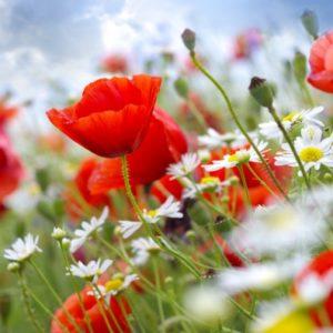 Т-Цветы