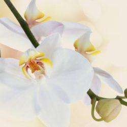 КФ Цветы-022