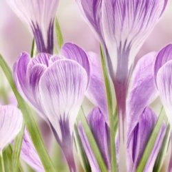 КФ Цветы-030