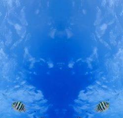 КФ Море-001