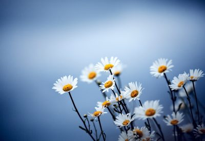Т-Цветы-021