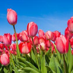 Т-Цветы-025