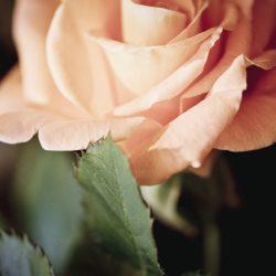 Т-Цветы-092