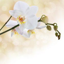 Т-Цветы-094