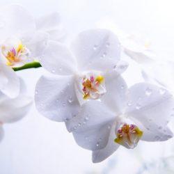Т-Цветы-096