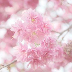 Т-Цветы-101